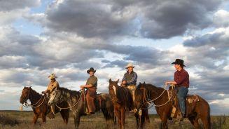 Vier Freunde, 16 wilde Mustangs: 'Ungezähmt'