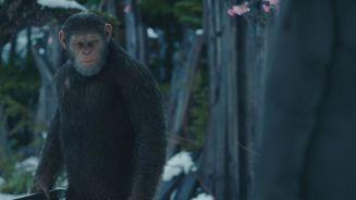 'Planet der Affen': Ein Spiegel unserer Gesellschaft?