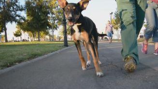Musikalische Kläffer: Erstes Hundekonzert in Barcelona